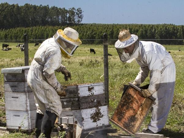 UPM impulsa primera experiencia mundial en certificación apícola con origen forestal sostenible