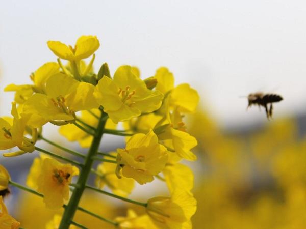 Mercado de la miel de Uruguay: aumento del volumen exportado a un precio en baja