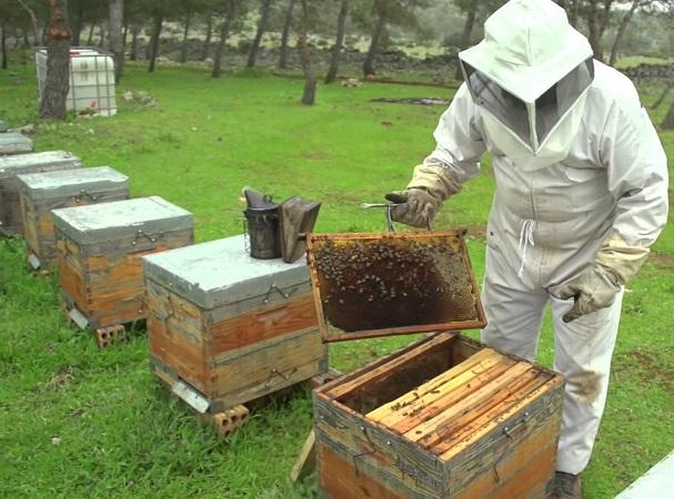 Hecatombe de abejas en el tercer mundo