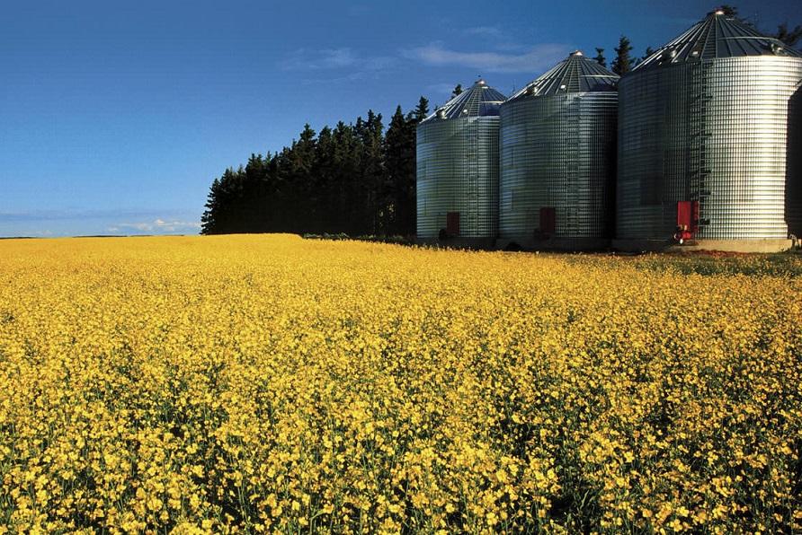 La Dirección se Servicios Agrícolas mostró la relación de los polinizadores y fitosanitarios
