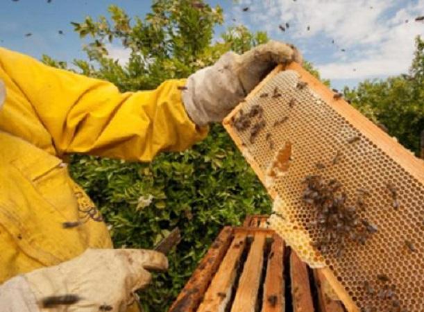 Los apicultores deben presentar Declaración Jurada Anual Obligatoria