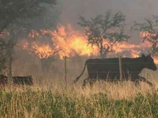 Inventan tecnología capaz de predecir incendios forestales antes de que ocurran