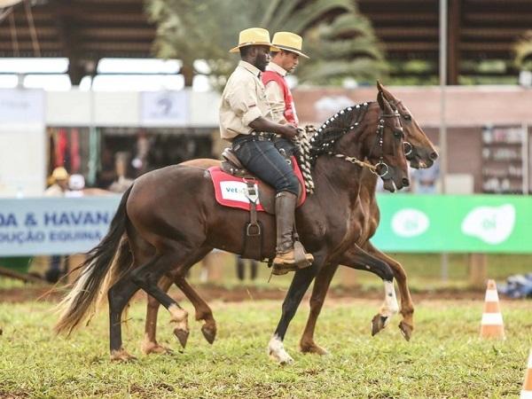 Caballos Mangalarga logran altos negocios por U$S 34 millones