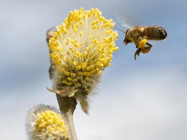 Detectan posibles causas de la muerte de abejas en Rusia