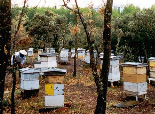 """Denuncian """"muy triste escenario"""" de la apicultura en el este del país"""