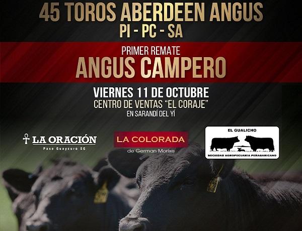 Aramburu vendió en 52 minutos los 45 toros del Angus Campanero