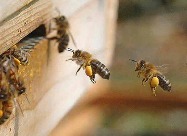 Para bajar costos, los apicultores hicieron menor manejo, menos visitas y menos trashumancia, dijo Chrtistophe Lhéritier