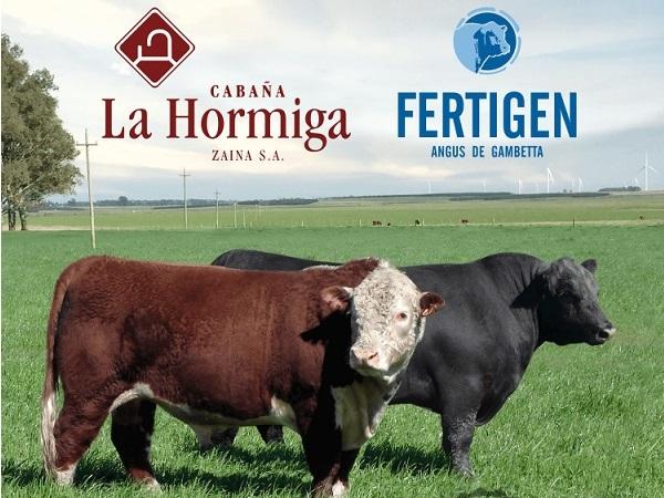 Mañana Valdez remata los toros de La Hormiga y Fertigen