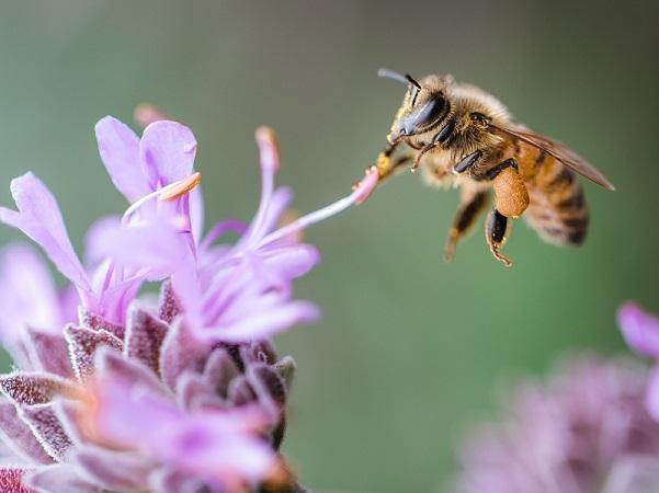 Científicos descubren cómo reacciona una planta ante la presencia de un insecto polinizador