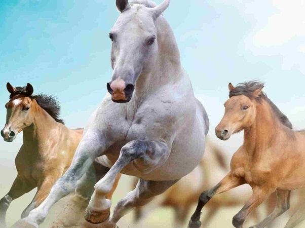 Por Muermo se negó el ingreso de 7 equinos brasileños