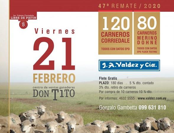 Mañana Valdez remata los Corriedale y Merino Dohne de Gambetta