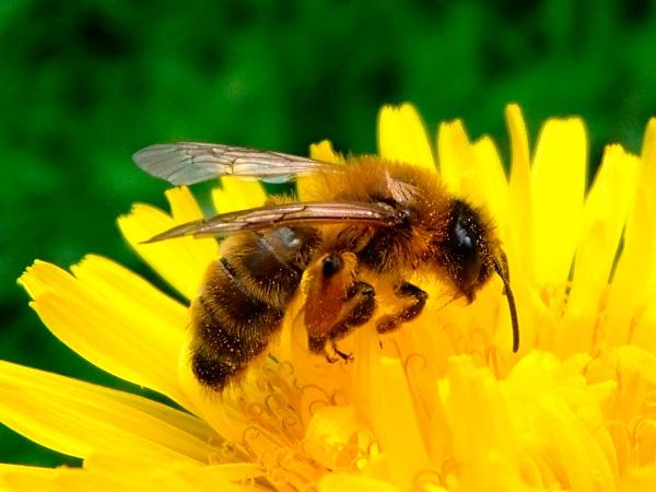 La apicultura enfrenta instancias de dificultad que se continúan agravado