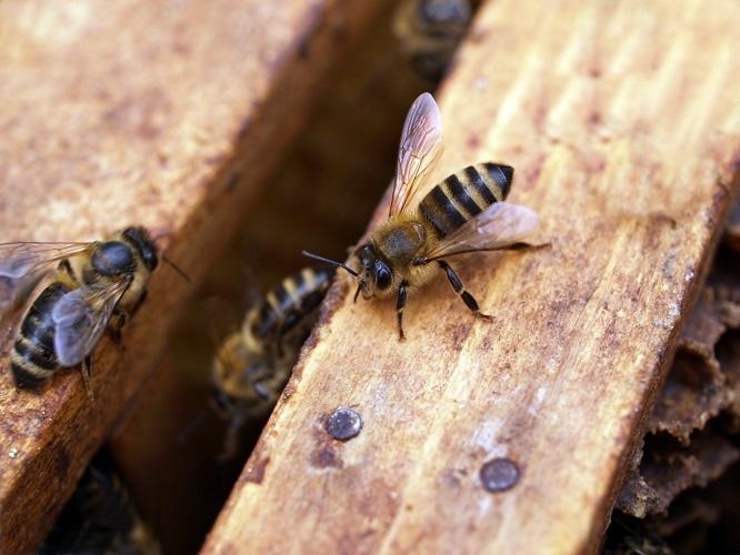 Exportaciones de miel de Uruguay en el período enero a marzo 2020