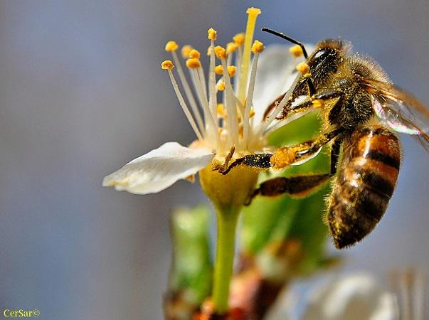 Una pequeña primavera en el mercado mundial de la miel