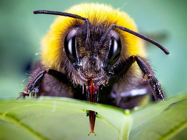 Investigación de la universidad de Zurich sobre abejorros que aceleran la floración