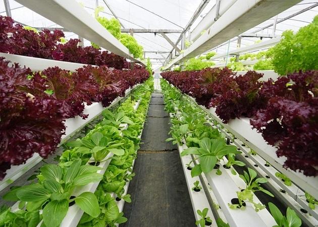 Técnico de Embrapa: alimentar al planeta con sostenibilidad dependerá de la innovación