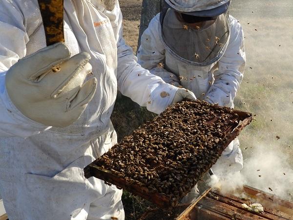 Listado de establecimientos apícolas uruguayos autorizados a exportar a Arabia Saudita