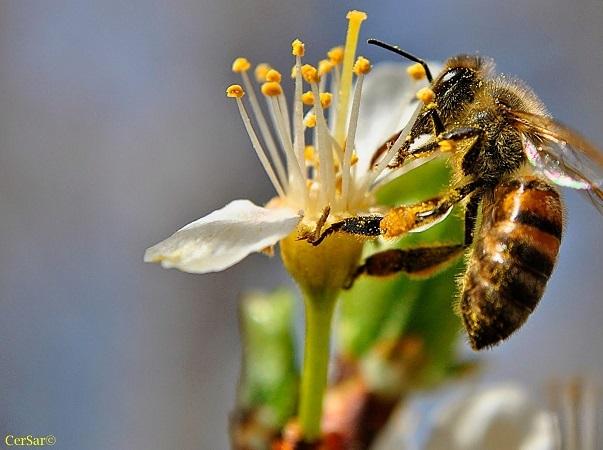 Investigación concluye que crece la percepción positiva sobre las abejas