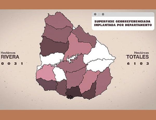 Inavi presentó proyecto de georreferenciación y trazabilidad de la vitivinicultura uruguaya