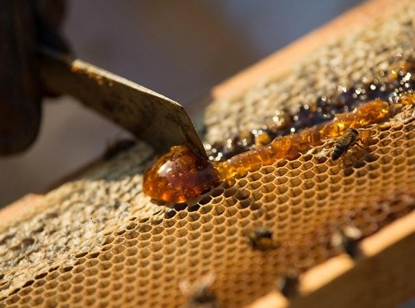 A punto caramelo, de miel