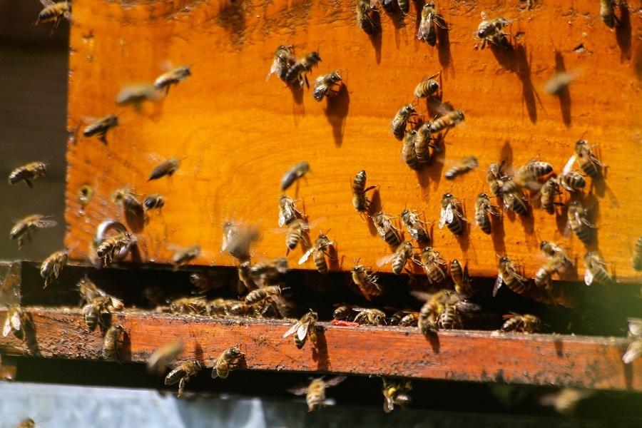 Encuesta sobre pérdidas de colonias de abejas