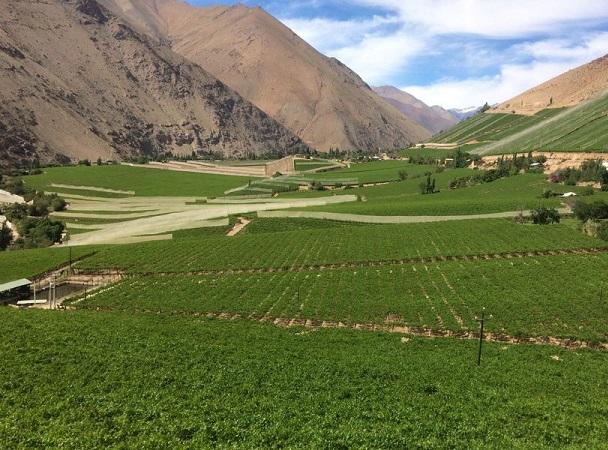 Chile y Argentina conformaron la ruta del vino más larga del mundo