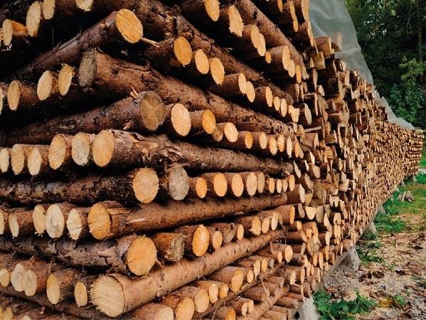 Colonos de Tacuarembó a favor de limitar los suelos forestales