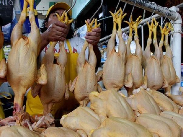 """Singapur, primer país del mundo en aprobar """"carne"""" de pollo cultivada"""