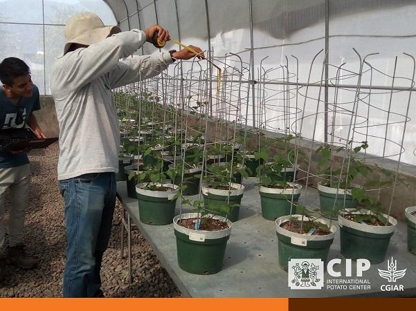 Una pandemia de cultivos sería tan devastadora para la seguridad alimentaria como el Covid-19