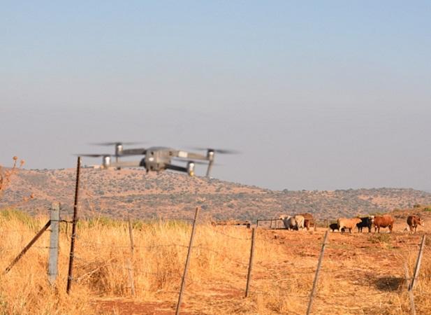 Israelíes crearon un dron para pastorear ganado