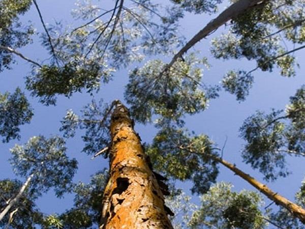 2021, los árboles siguen creciendo