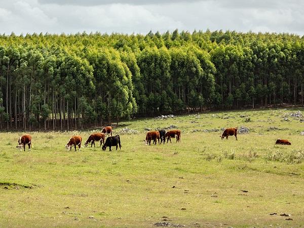 Cinco mitos sobre la forestación, desmitificados