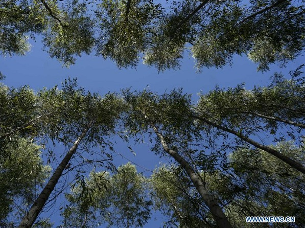 Reducción arancelaria de China beneficia producción forestal argentina