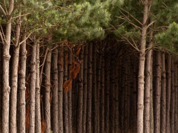 Argentina agiliza los trámites de la Ley de Promoción Forestal