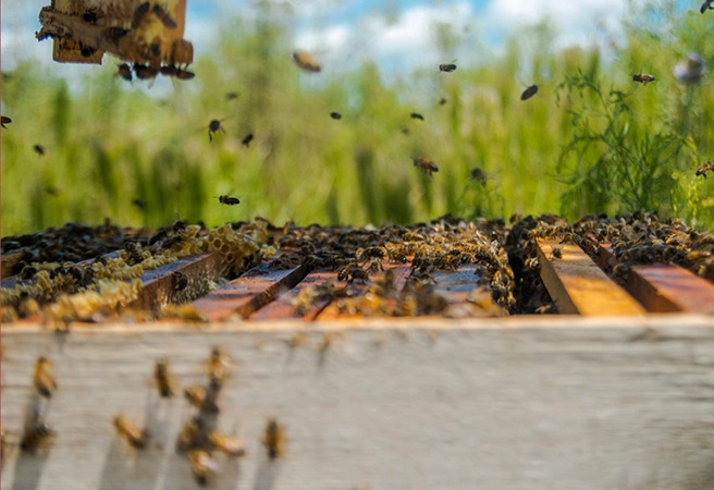 La apicultura genera 12.000 empleos