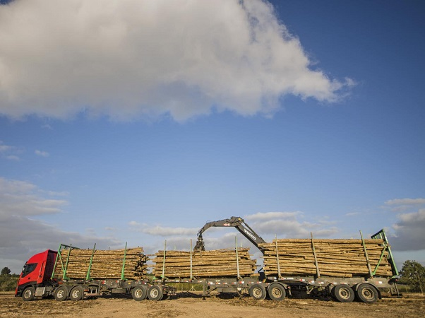 Uruguay aprobó camiones tritrenes para la forestación
