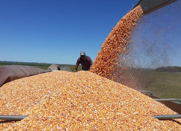 ¿Cuál es la situación de cultivos, luego de las últimas lluvias?