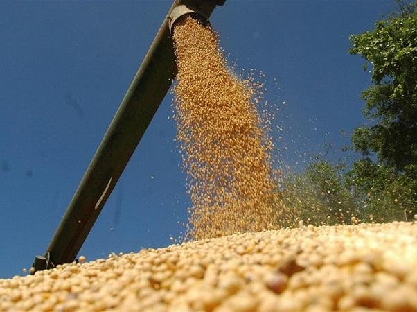Nueve cultivos al año y con precios prometedores
