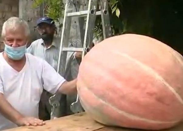 Años de grandes zapallos, hora cosechan uno de 38 kilos en La Paloma