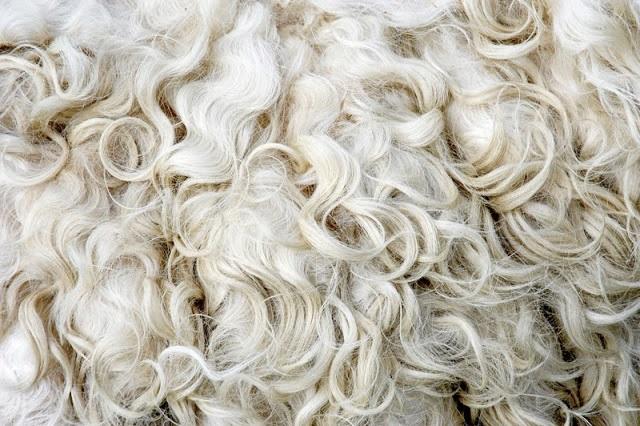 La oferta impulsó los precios de la lana a la baja