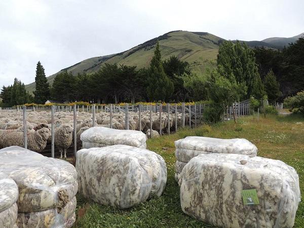 """Hay interés en lanas """"por debajo de las 21 micras, principalmente"""""""
