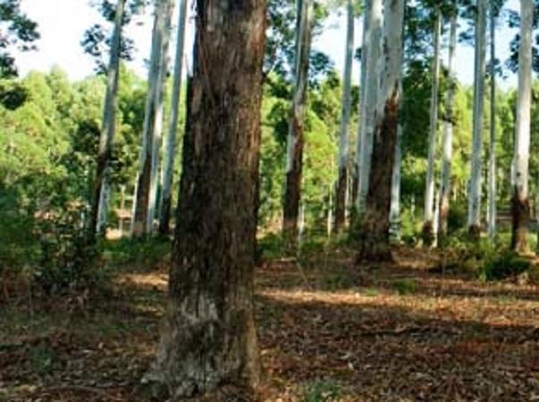 En Brasil, los árboles en sistemas integrados acumulan 8 Ton. de carbono por hectárea