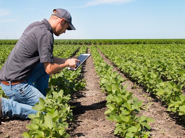 La agricultura es el colchón y el motor para la recuperación y el crecimiento