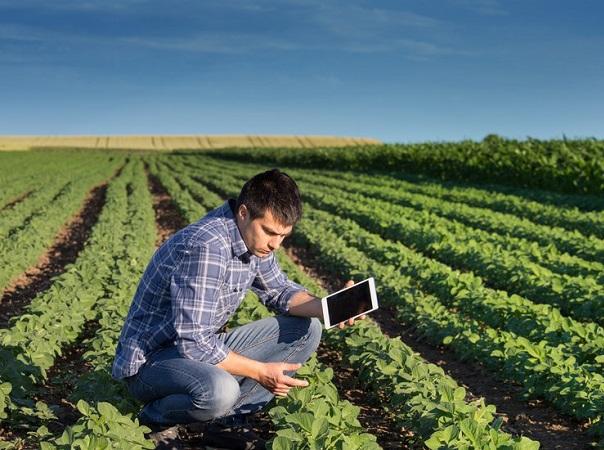 El seguro agropecuario es una herramienta fundamental para el agro