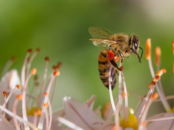 Científico danés encontró la forma de que pesticidas agrícolas no afecten a los insectos útiles