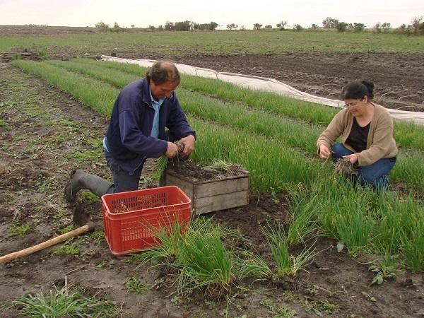 El Ministerio de Ganadería releva uso de TICs en la agricultura familiar