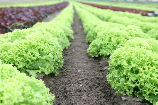 El MGAP comunicó la apertura del Registro Nacional Frutihortícola para granjeros