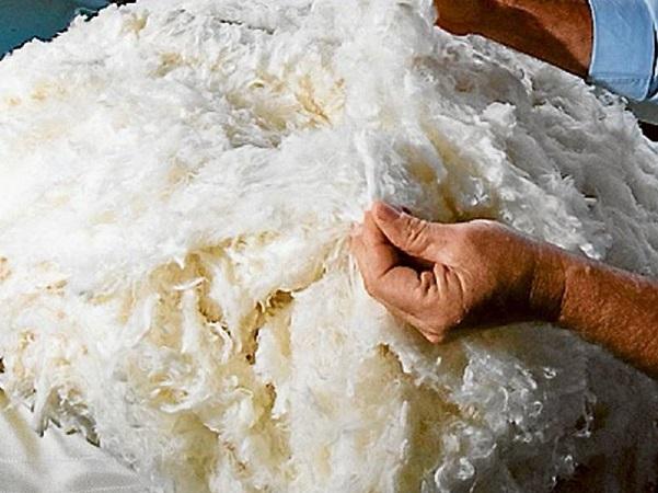 Diámetro y rendimiento de lana de zafra 2020