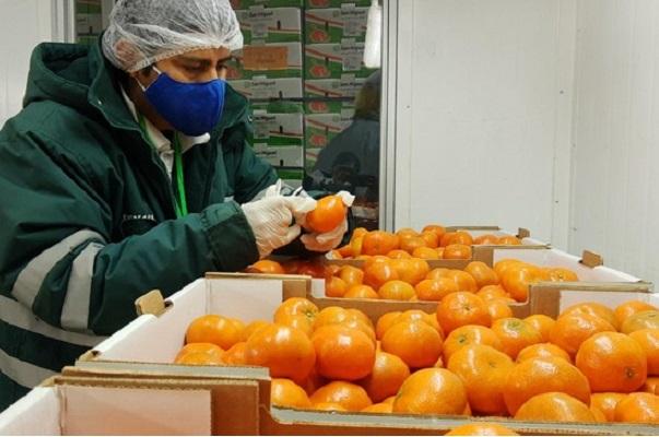 Uruguay importará cítricos de Perú