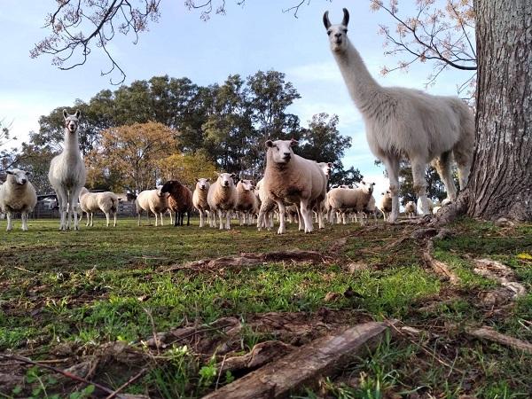 ¿Cuál es el Día de la Carne de Cordero en Uruguay?